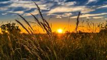 Tarım ürünleri üretici fiyat endeksi (Tarım-ÜFE) yıllık %21,77 arttı, aylık %0,79 azaldı