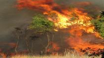 Marmaris ve Milas'ta da ormanlık alanda yangın çıktı