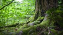 Mücadele topyekün ormanı korumadan, bilinçlenmeden geçiyor