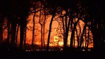 Yunanistan: Atina yakınlarındaki orman yangını devam ederken çok sayıda kişi bölgeyi boşalttı